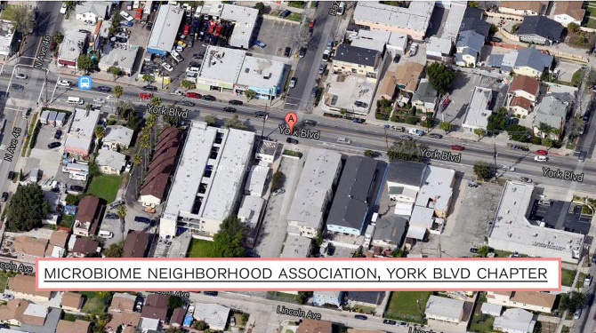 Satellite view of the York Boulevard MicrobiomeNeighborhoodAssociation, Kristina Ortega.